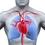 Localizan el interruptor del corazón