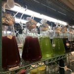 El Banco Español de Algas busca empresas que exploten 25 nuevos géneros y especies con potencial gastronómico y alimentario