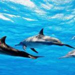 La ULPGC vigilará las enfermedades de los cetáceos en España