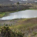SOS por las Charcas de San Lorenzo de Gran Canaria: SEO BirdLife alerta de que su estado de abandono amenaza su conservación