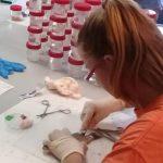 Investigación de la ULPGC: La basura marina está ya en la mayoría de las lubinas